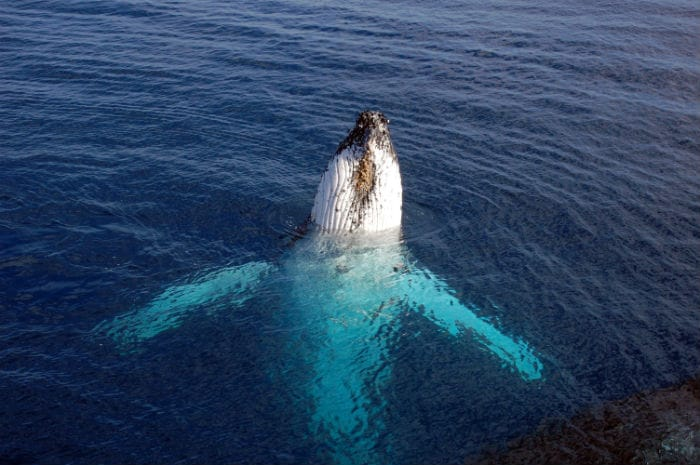 Amazing whale watching in Western Australia