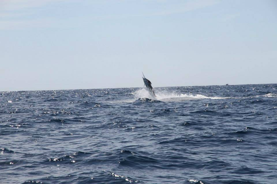 Marlin Fishing in WA