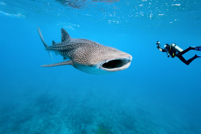Up close with a whale shark