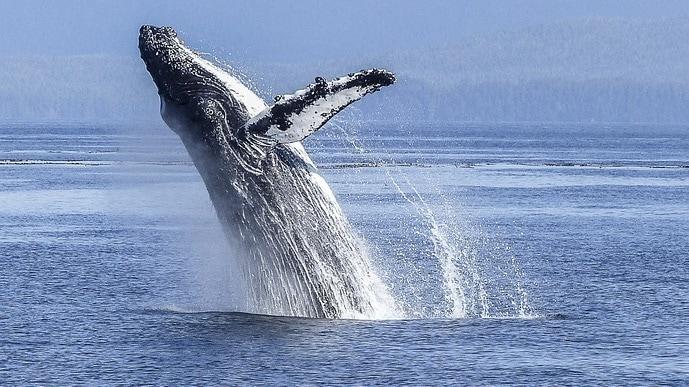 Whale Watching WA