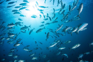 There are many different fishing excursions available