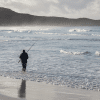 A fisherman in the water with a surf rod on a West Australian beach.